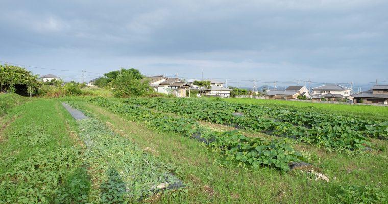 有機農園小七郎さんの畑にお邪魔してきました!