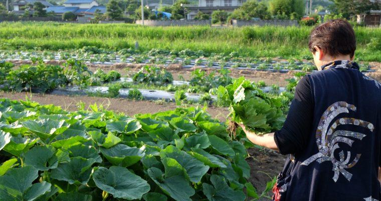 有機農園小七郎さん